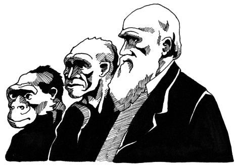 Darwin illustration